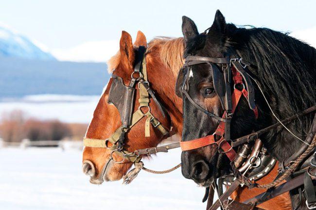 Pferdeschlittenfahrten im Winterurlaub in Flachau, Salzburger Land