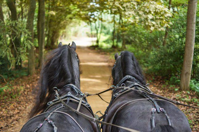 Pferdekutschenfahrten - Sommerurlaub in Flachau